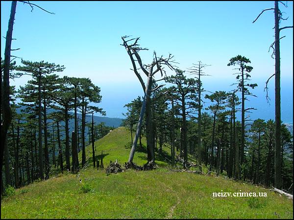 Тропа на хребте Баланын-Каясы