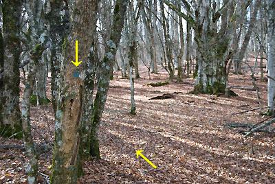 Метка на дереве, показывающая поворот на тропу на Кибит-Богаз