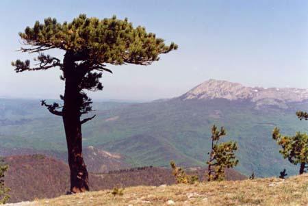 Вид на Чатырдаг с Бабугана. На среднем плане внизу хребет Конек