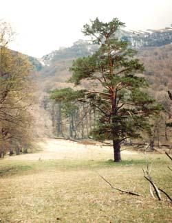 Вид на Гавриель-богаз с Монастырской поляны